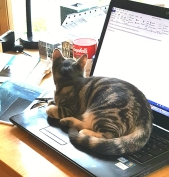 tyg on keyboard